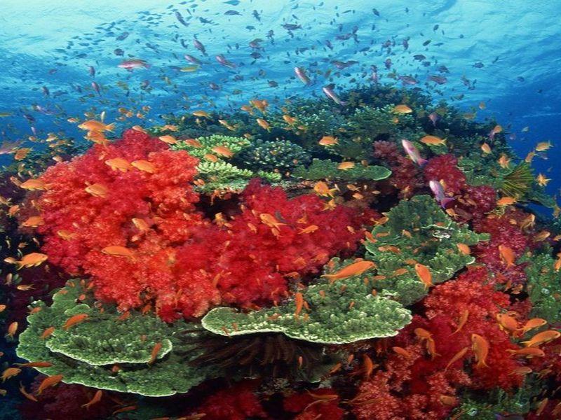 Coral reefs, Andaman