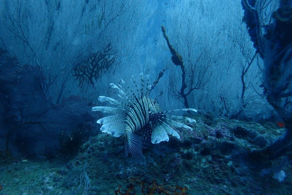scuba diving in andaman, places to visit in india for the aquaphiles